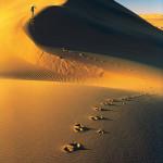 BONATTI 6 Deserto del Namib Namibia AprileMaggio 1972 P