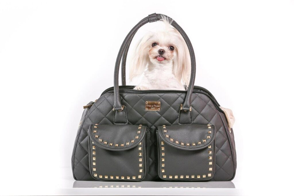 Luxury Dog Fashion